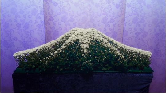 ビューティ花壇